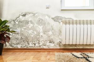 assainissement murs