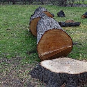 Prix abattage d'un arbre