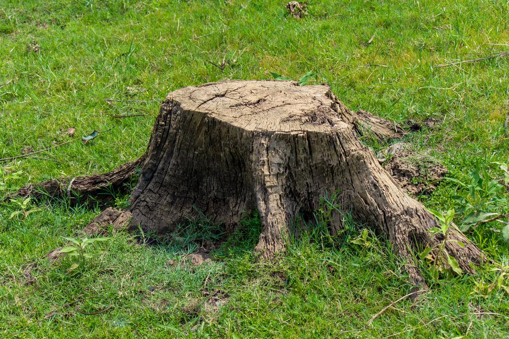 Prux abattage arbre avec déssouchage