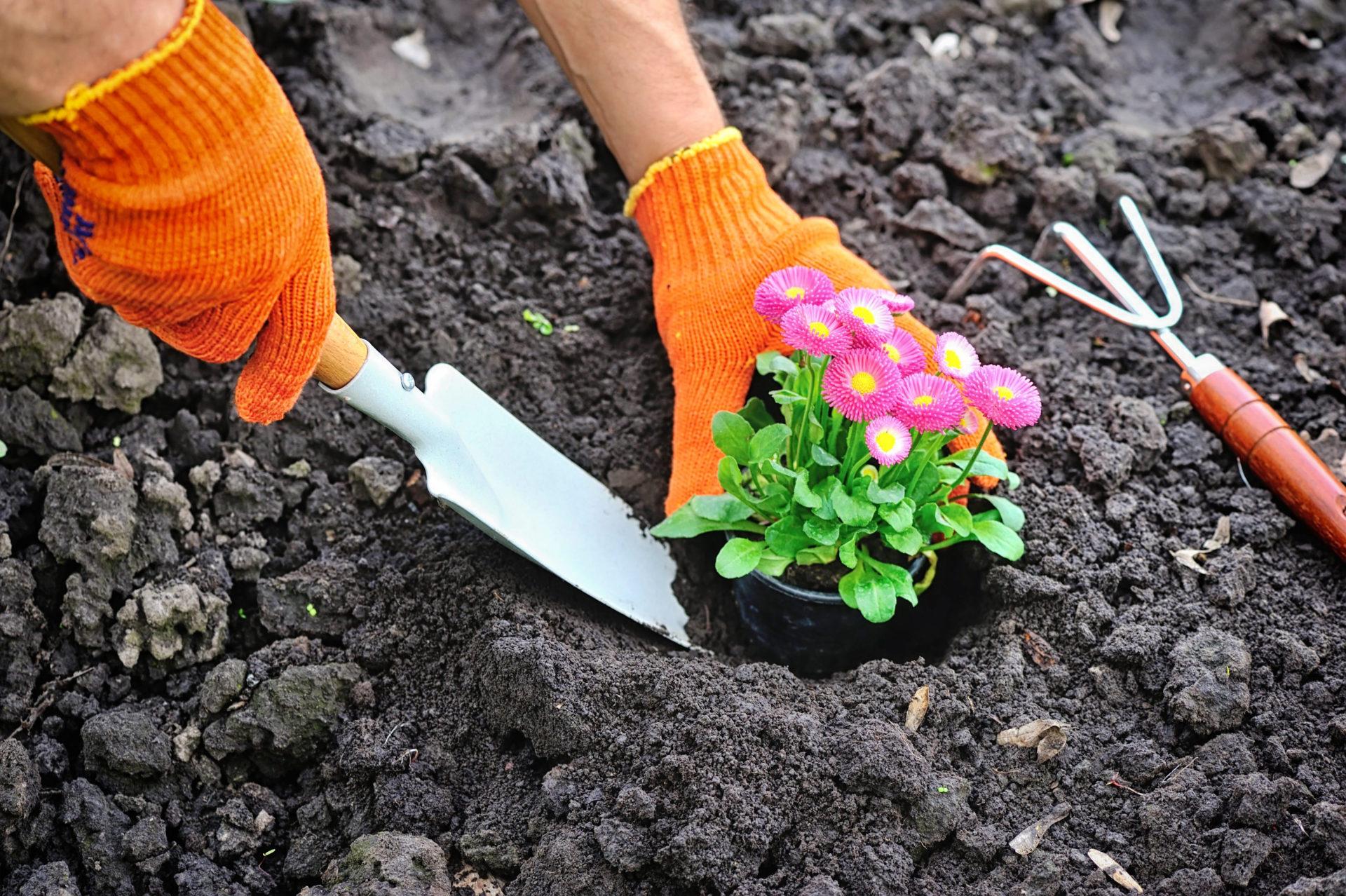 Comment Aménager Jardin Pas Cher le guide de l'aménagement de jardin : prix, prestations et