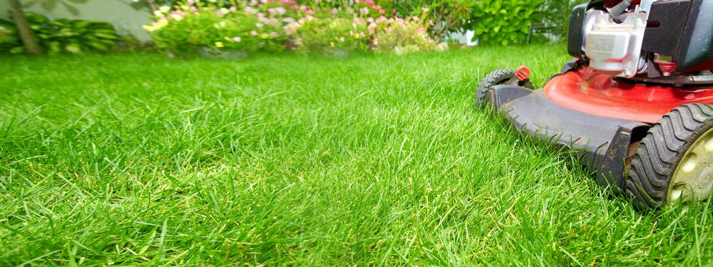 tarif tonte pelouse