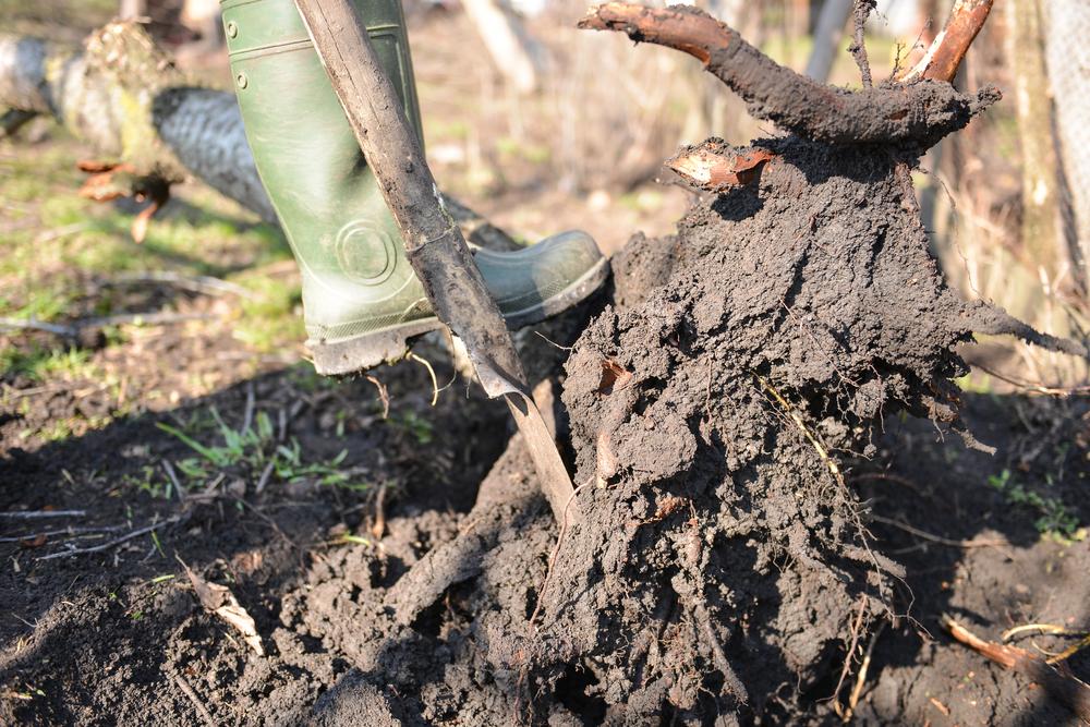 Utilisation d'un outil pour dessoucher un arbre